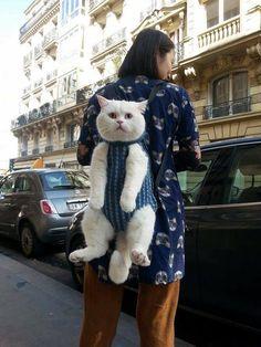Un chat porté: Chat alors! Cat in babycarrier https://www.facebook.com/NATURIOU/photos/pb.139509919392414.-2207520000.1458764707./1178535388823190/?type=3