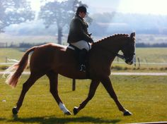 Emma Morrell with Chilly at Winning at Royal London – Fuller Fillies yellow show shirt, jods, show boots
