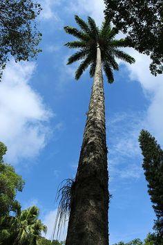 palmeira do parque estadual do desengano e a ultima reserva de mata atlântica do norte fluminense .
