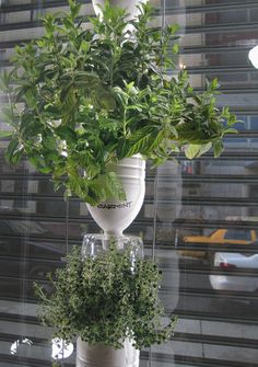 interesting… have to understand it better.. (hydroponic vegetable garden from discards)