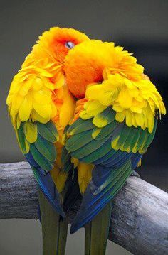 Love Birds ♥️♥️♥️   Most Beautiful