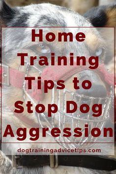 Dog Obedience Training - Canine aggression doesn't mean you've got a bad dog, or that you're a bad owner. Here are some Training Tips to Stop your Dog's Aggressive behavior. Training Your Puppy, Dog Training Tips, Potty Training, Dog Aggression Training, Toilet Training, Training Classes, Dog Minding, Cesar Millan, Easiest Dogs To Train