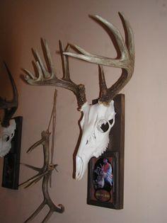 mounting european deer skulls - Bing Images