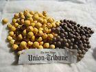 50 Jubaea Chilensis wine palm seeds FREE SHIPPING