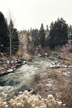 Deschutes River off of Archie Briggs Rd in Bend OR by Rachel Follett (Lovely Clusters)