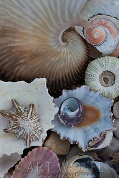 Seashells, South Africa...