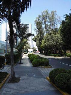 Begonias avenue. Lima. Peru