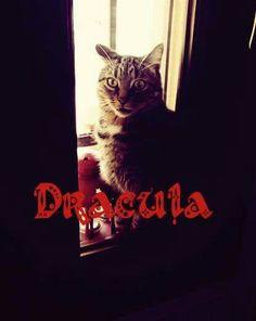 #dracula by Simba