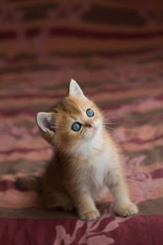 Precious Kitten