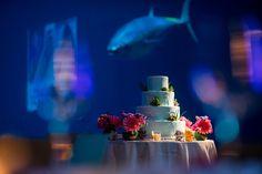 Tuna photo bomb at the Monterey Bay Aquarium by Brian MacStay Photography  www.brianmacstay.com