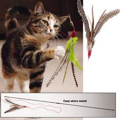 Cat Toys Ideas: GoCat Da Bird Pull Apart Rod and Bird Cat Feather Toys, Assorted Colors *** Check out this great sponsored product.
