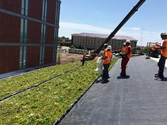 The installation of a LiveRoof on the Central Michigan University Biosciences Building will provide a fully-grown carpet of custom-mix,… Central Michigan University, Construction News, Green Roofs, Carpet, Ads, School, Building, Buildings, Blankets