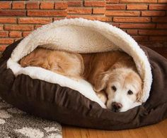 Get your pooch to stop climbing on the furniture once and for all by purchasing the dog cave bed. This oversized and insanely comfortable bed completely envelops Rex so he can burrow in its soft innards - ensuring he'll never favor the couch again.