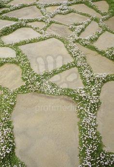 interplanted paving