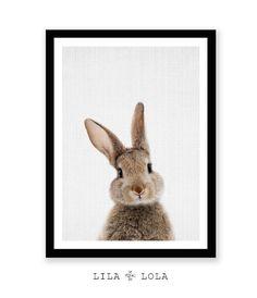 Guardería Animal conejo pared impresión arte bosque por LILAxLOLA