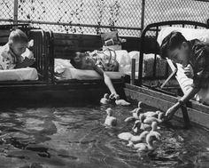 1956 | Animals Make a Hospital Happy | Dinner for ducklings is eagerly handed out by children crowding around a pool set up on the hospital sun deck. The ducklings were lent by an Ann Arbor farmer.
