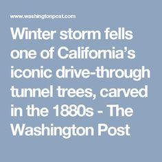 Winter storm fells one of California's iconic drive-through tunnel trees, carved in the 1880s - The Washington Post