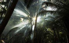 palms, mist, sun