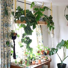 else crazy for hanging plant shelf? Thanks for sharing with us in We post a new photo from each week. Tag your indoor green oasis for a chance to be featured. Hanging Plants Outdoor, Diy Hanging, Hanging Planters, Indoor Plants, Patio Plants, Room With Plants, Plant Shelves, Shelves With Plants, Shabby Vintage