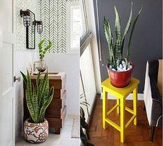 Planta em casa é tudo de bom, não é ? Mas vc sabia que uma delas é ótima para alérgicos porque limpa o ar à noite? Veja mais neste post