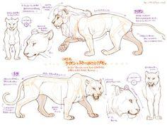 Diferenças anatômicas entre tigres e leões