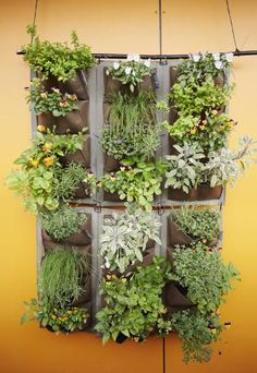 How to Grow a Vertical Garden | Here's how to get started with the latest green-thumb trend.