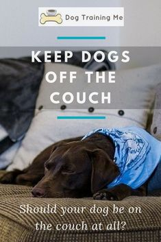 Do you want to know how to keep your dog off the couch? Should you let your dog on the couch at all? #dogtips Puppy Care, Dog Care, Baby Care, Keep Dog Off Couch, Dog Separation Anxiety, Dog Minding, Best Dog Training, Training Online, Aggressive Dog