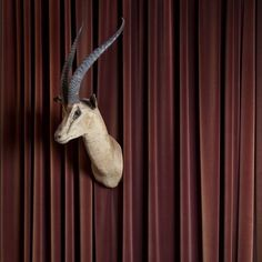 #marcellobonfanti #photographer #photography #fine #art #architecture #exhibition #flaneur #mollino #house #museum #torino #turin #italy #italia #italian #cortonaonthemove #creativeeurope #exhibition #COTM2015 #cortonaotm #flnr #antelope #taxidermied #taxidermy Turin Italy, Taxidermy, My Works, Museum, Fine Art, Architecture, Creative, Instagram Posts, Photography