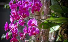 Side view of the orchid wall garden © Britt Conley