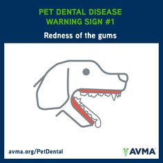 One of the signs of pet dental disease is redness of the gums. Notice this problem in your pet? Contact your veterinarian.