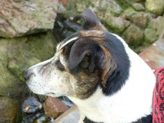 Hund: was guckt der Otter denn so blöd?