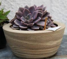 Ateliê do Barro: Vasos de suculentas (rosa de pedra)