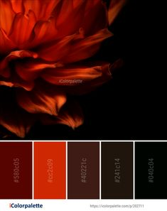 Color Palette Ideas from Flower Petal Flora Image Orange Color Palettes, Colour Pallete, Colour Schemes, Color Trends, Color Combos, Color Combinations For Clothes, Design Seeds, Colour Board, Color Of Life