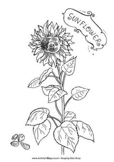 Weve Got A Huge Collection Of Original Flower Colouring Pages We Hope You Like Them Nicely Coloured In An Mounted On Some Contrasting Card Or Paper They