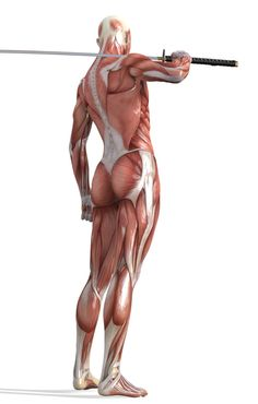 Hibou花花采集到人体(213图)_花瓣 Muscle Anatomy, Body Anatomy, Anatomy Reference, Art Reference Poses, Action Poses, Human Body, Sketches, Statue, Upper Body