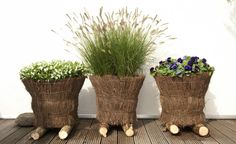Ziergräser im Topf für Terrasse und Balkon -  Im Spätsommer ist oft wieder Platz für neue Pflanz-Ideen: Mit sonnenwarmen Farben, filigranen Halmen und federleichten Blüten erobern Ziergräser jetzt Terrassen und Balkone