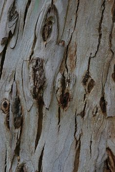 Tree Bark - pale chalky colour inspiration; natural surfaces; organic texture