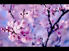 Healing Chinese ZEN music of Anxiety & Stress | To pacify the body & Mind | Relax Music - YouTube