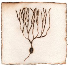 One of the neurons (Santiago Ramón y Cajal) I'd love to put on my wall...