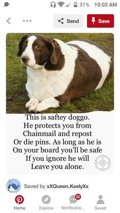 SAFTEY DOGGO