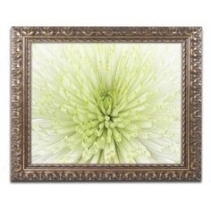 Trademark Fine Art 'Lime Light Spider Mum' Canvas Art by Cora Niele, Gold Ornate Frame, Size: 11 x 14, Multicolor
