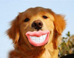 dog toy dog lips - Google Search