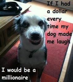 ..every time my dog makes me laugh ...
