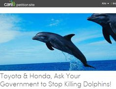 Please help the dolphins in Japan and sign and share this petition: Toyota & Honda, Ask Your Government to Stop Killing Dolphins!
