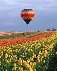 Home to the famous Wooden Shoe Tulip Festival each year, this magnificent family-owned farm bursts forth in a spectacular display of color each spring. Air Balloon Rides, Hot Air Balloon, Beautiful World, Beautiful Places, Beautiful Pictures, Beautiful Flowers, Air Ballon, Tulip Festival, Tulip Fields