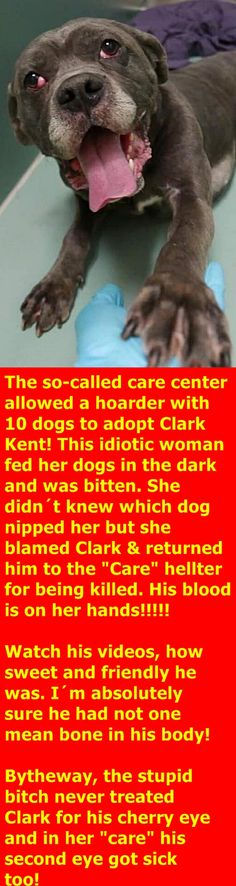 MURDERED 12/28/2017 --- RETURN 12/2017 --- SAFE 11/24/17 --- Hello, my name is Clark Kent. My animal id is #12415. I am a male gray dog at the Brooklyn Animal Care Center. The shelter thinks I am about 6 years 1 weeks old.  I came into the shelter as a stray on 12-Nov-2017.  Clark Kent is at risk due to being diagnosed with Canine Infection Respiratory Disease    https://www.facebook.com/photo.php?fbid=1532182206900530&set=p.1532182206900530&type=3&theater