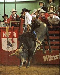 "rope-an-ole-blue-norther: "" Lane Frost at the National Finals Rodeo "" Rodeo Cowboys, Real Cowboys, Cowboy Art, Cowboy And Cowgirl, Urban Cowboy, July In Cheyenne, Lane Frost, National Finals Rodeo, Bucking Bulls"