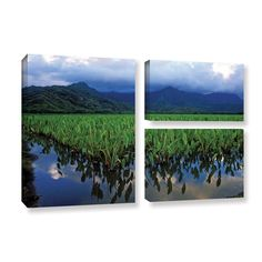 Kauai Taro Field by Kathy Yates 3 Piece Photographic Print on Gallery Wrapped Canvas Set