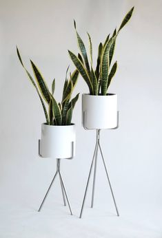Create the best plant stand that will make your house greener and more beautiful. Here are the simple and easy DIY Plant Stand Ideas you can create at home. Plant Stand, Hanging Plants Diy, Interior Plants, Exterior Wall Design, Interior Plants Decoration, Pot, Diy Plants, Diy Plant Stand, Wood Plant Stand