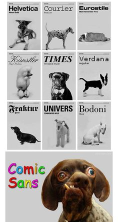 No black Labs? Hurrumph. Wonder what font they would be? Ariana maybe